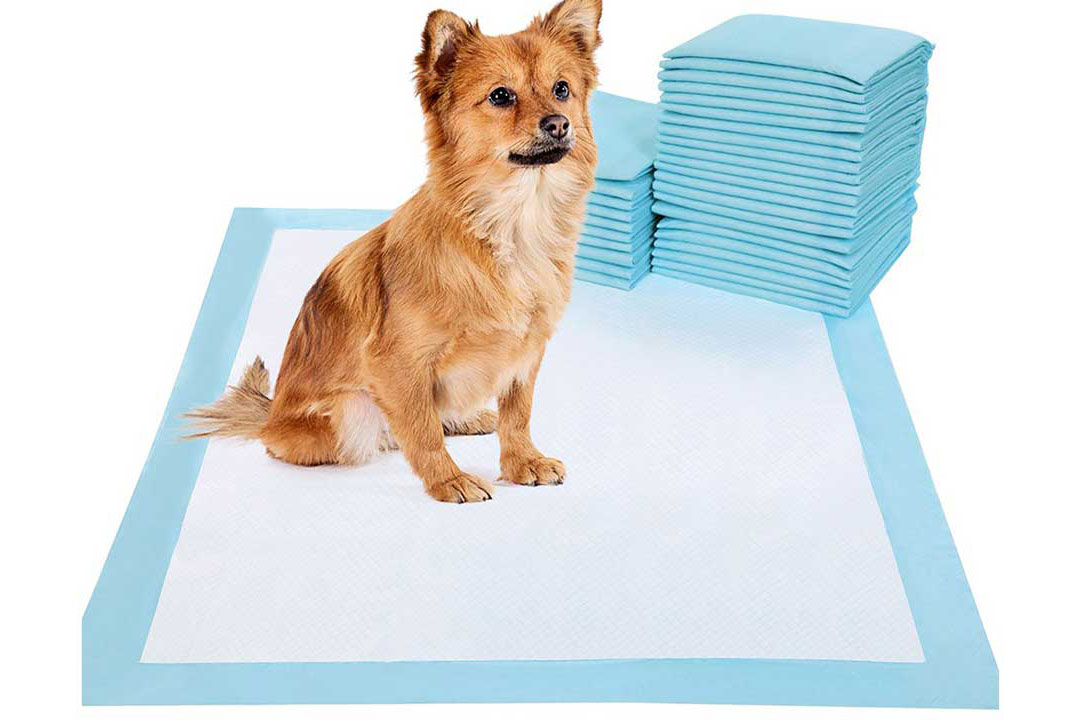 Small dog pee pads