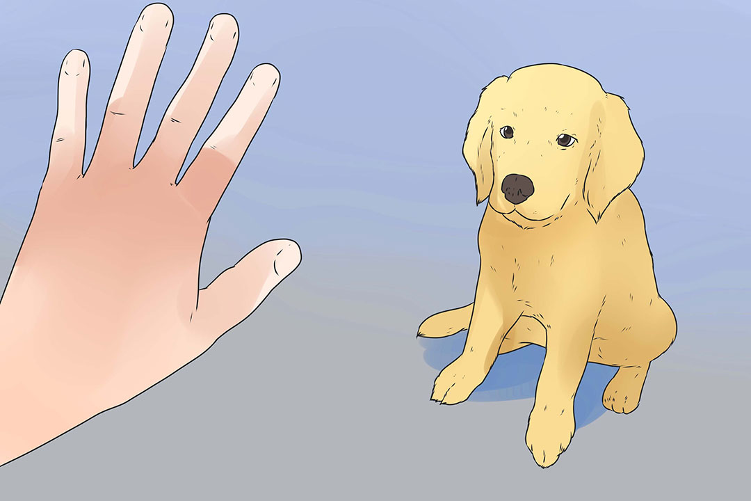Train your puppy use pet pads