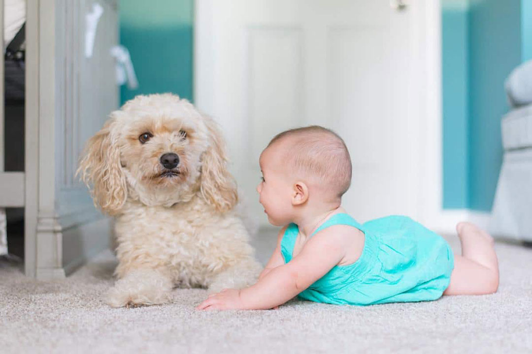 Can you clean your dog with baby wipes