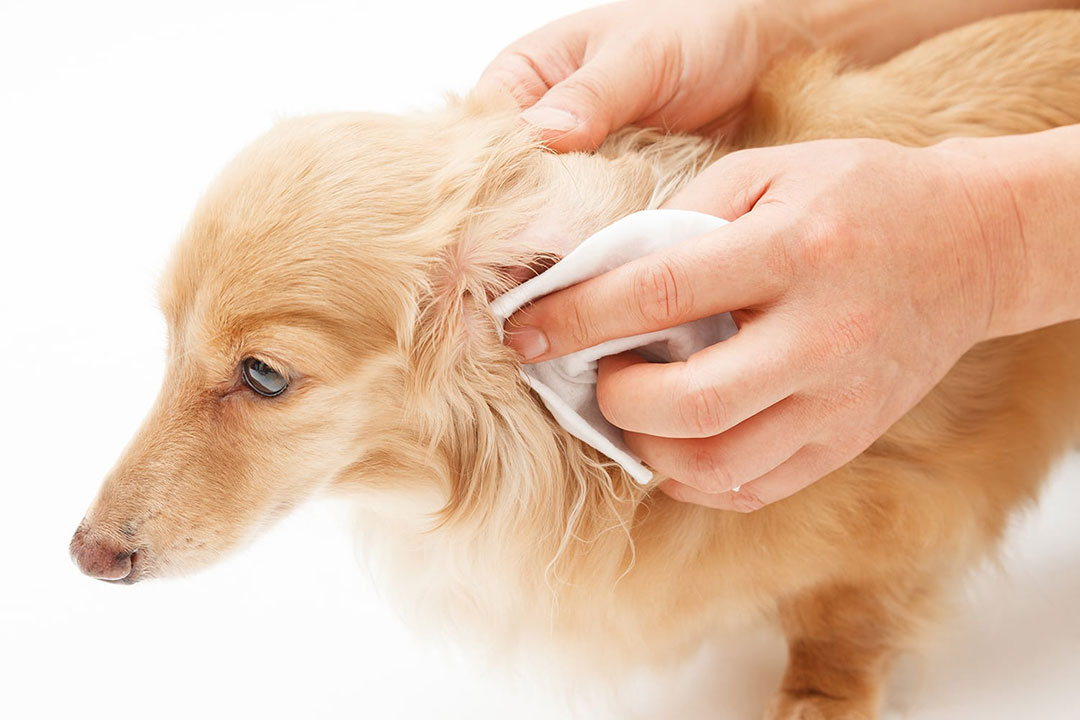 Use the right wipes to clean your dog