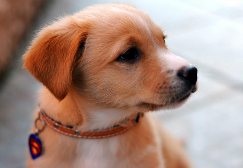 cute dog, best friend